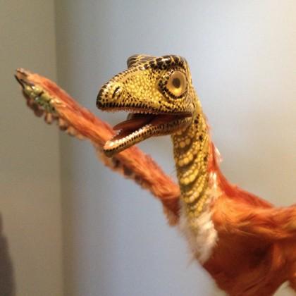 Archaeopteryx im Jura-Museum Eichstätt