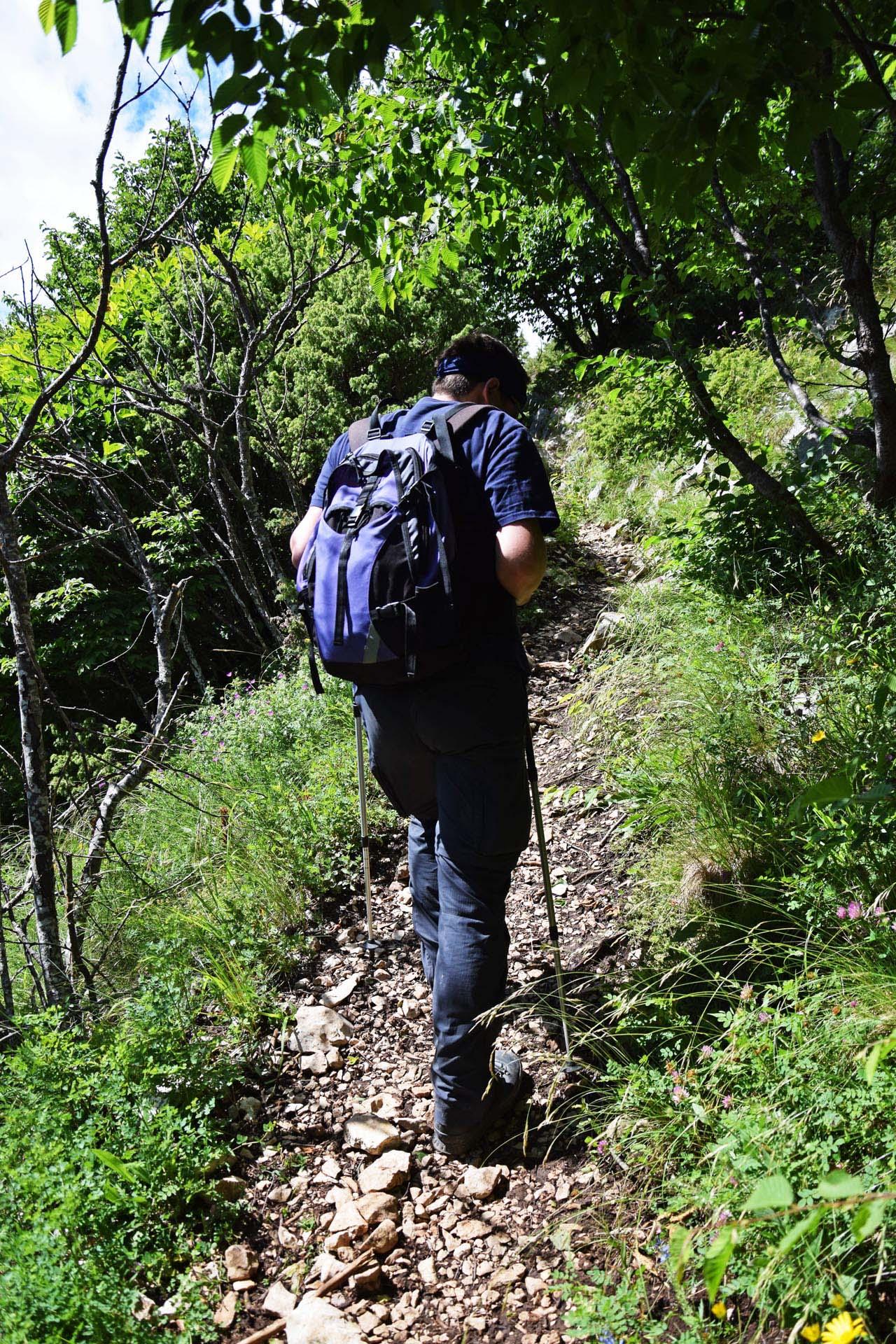 Aufstieg letztes Waldstueck