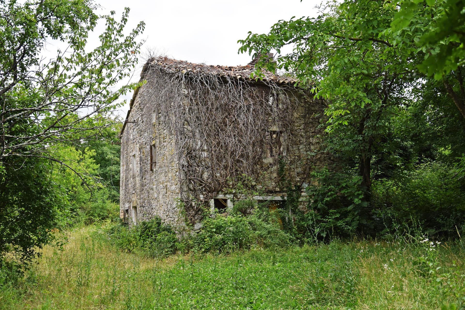 18 Verwachsene Ruine