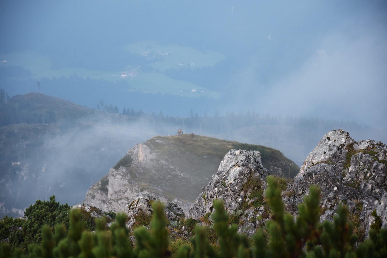 Gams im Nebel