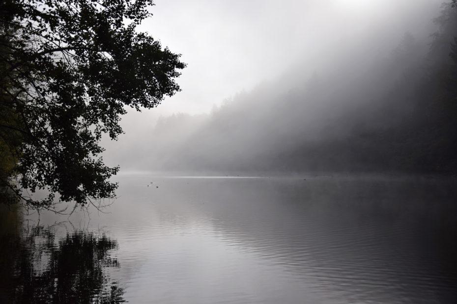 Nebel am Schlossweiher