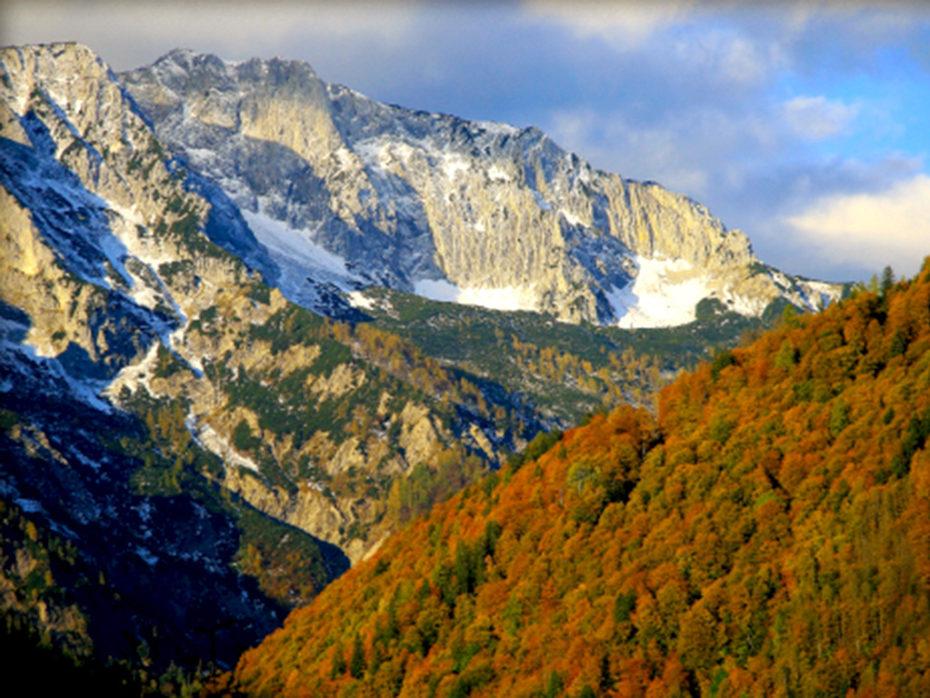 Buchenwälder, Bild: Nationalpark Kalkalpen/Mayrhofer
