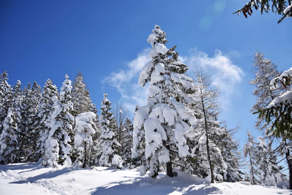 Pendling: Gipfelweg