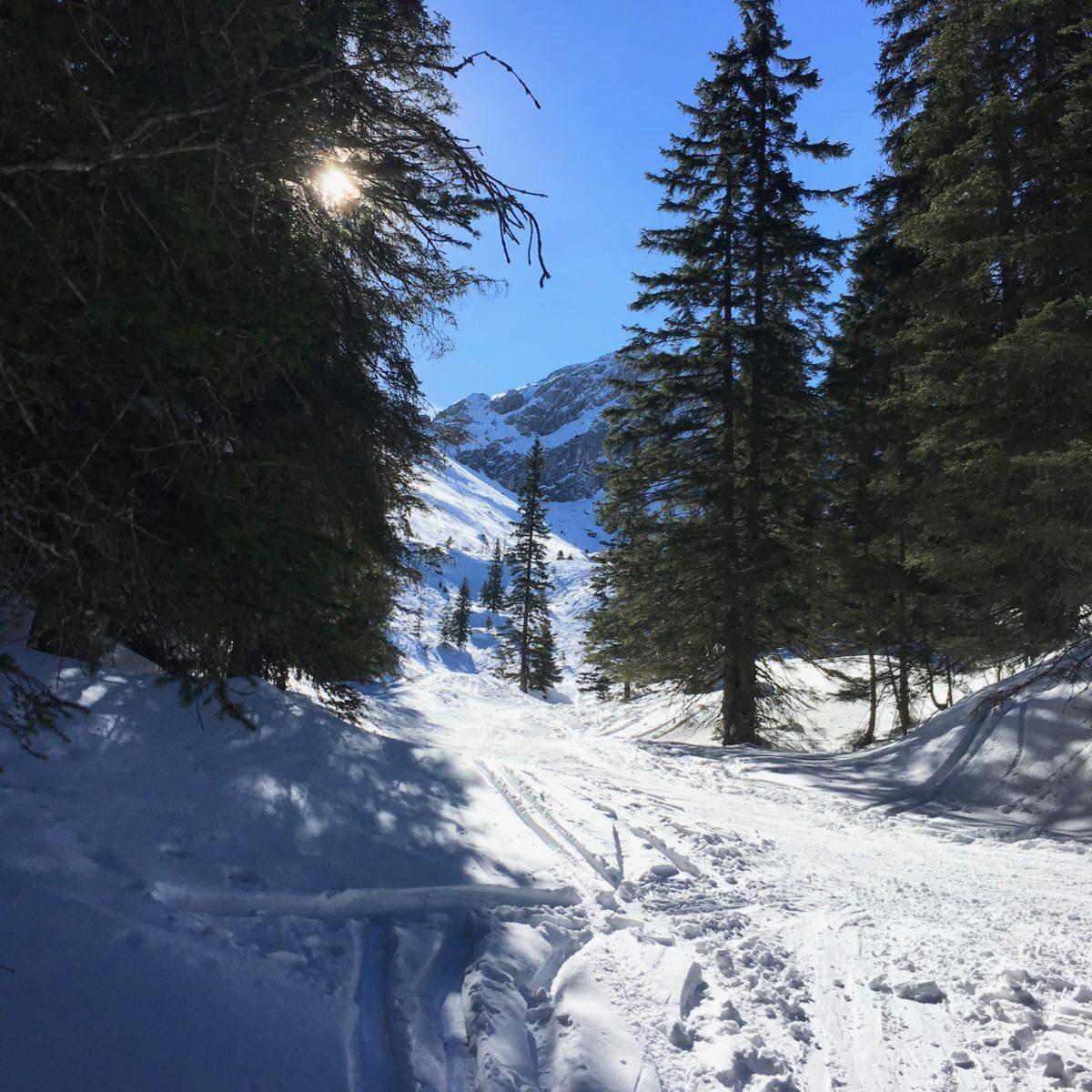 Aufstiegsspur in Richtung Bernadeinspitze und Alpspitze