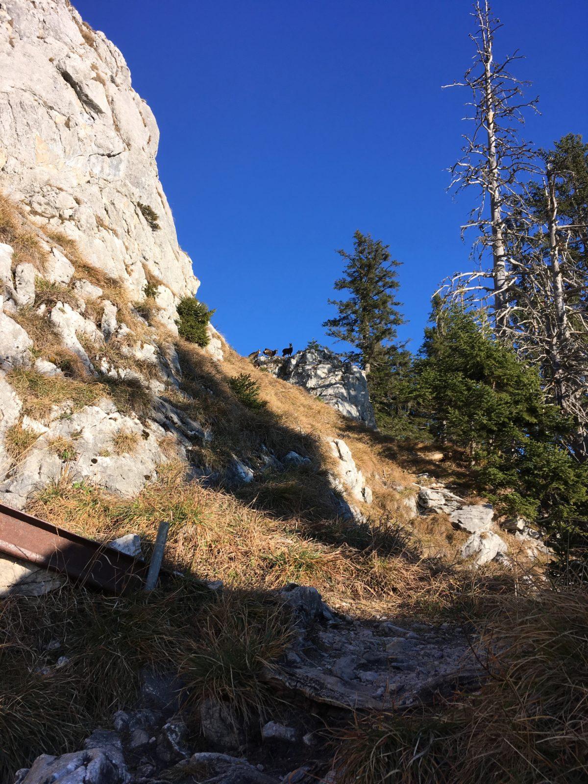 Tierische Begleitung im Klettersteig
