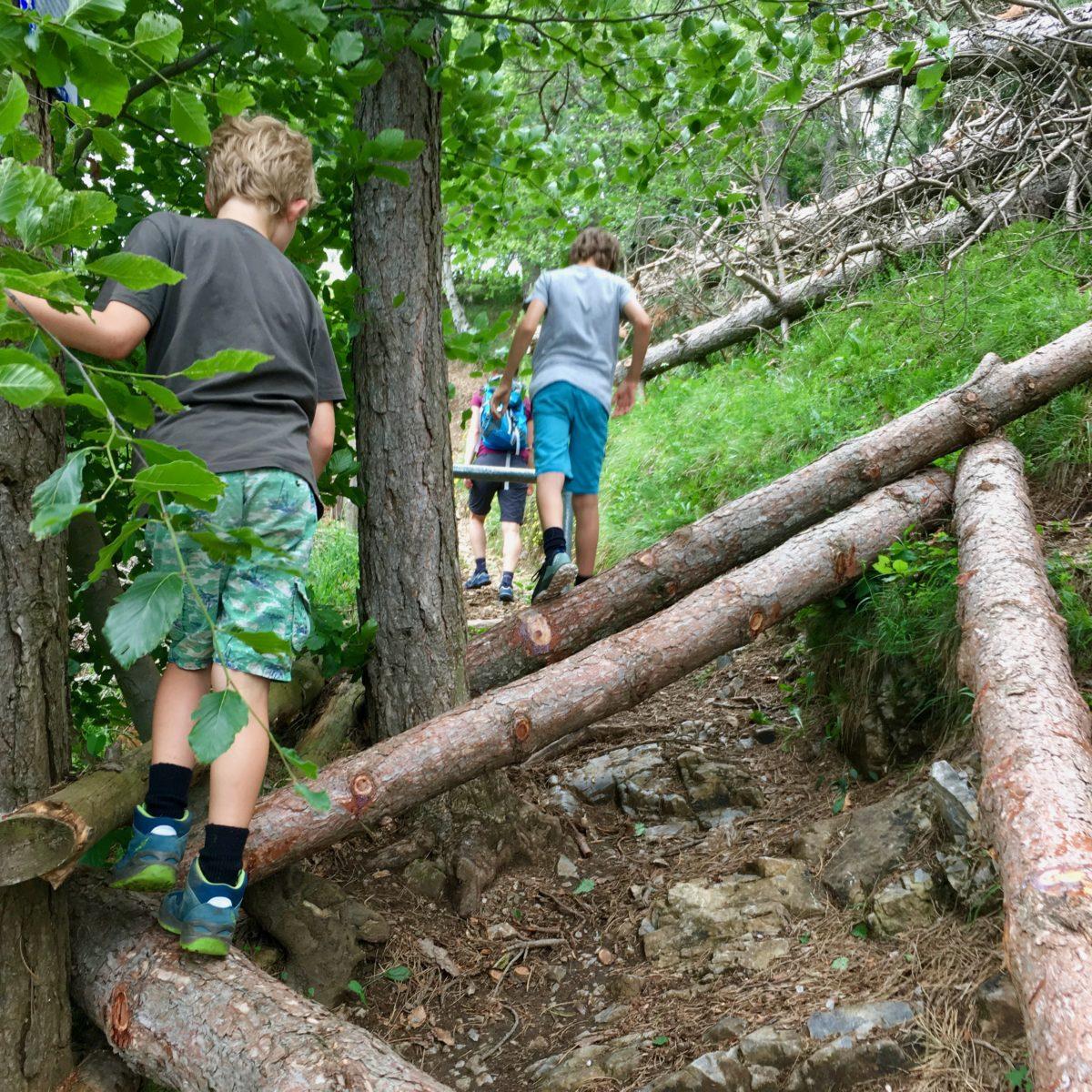 Kleine Kraxelei über (absichtlich) umgestürzte Bäume. Hier herrscht wohl ein Kleinkrieg mit den Mountainbikern…