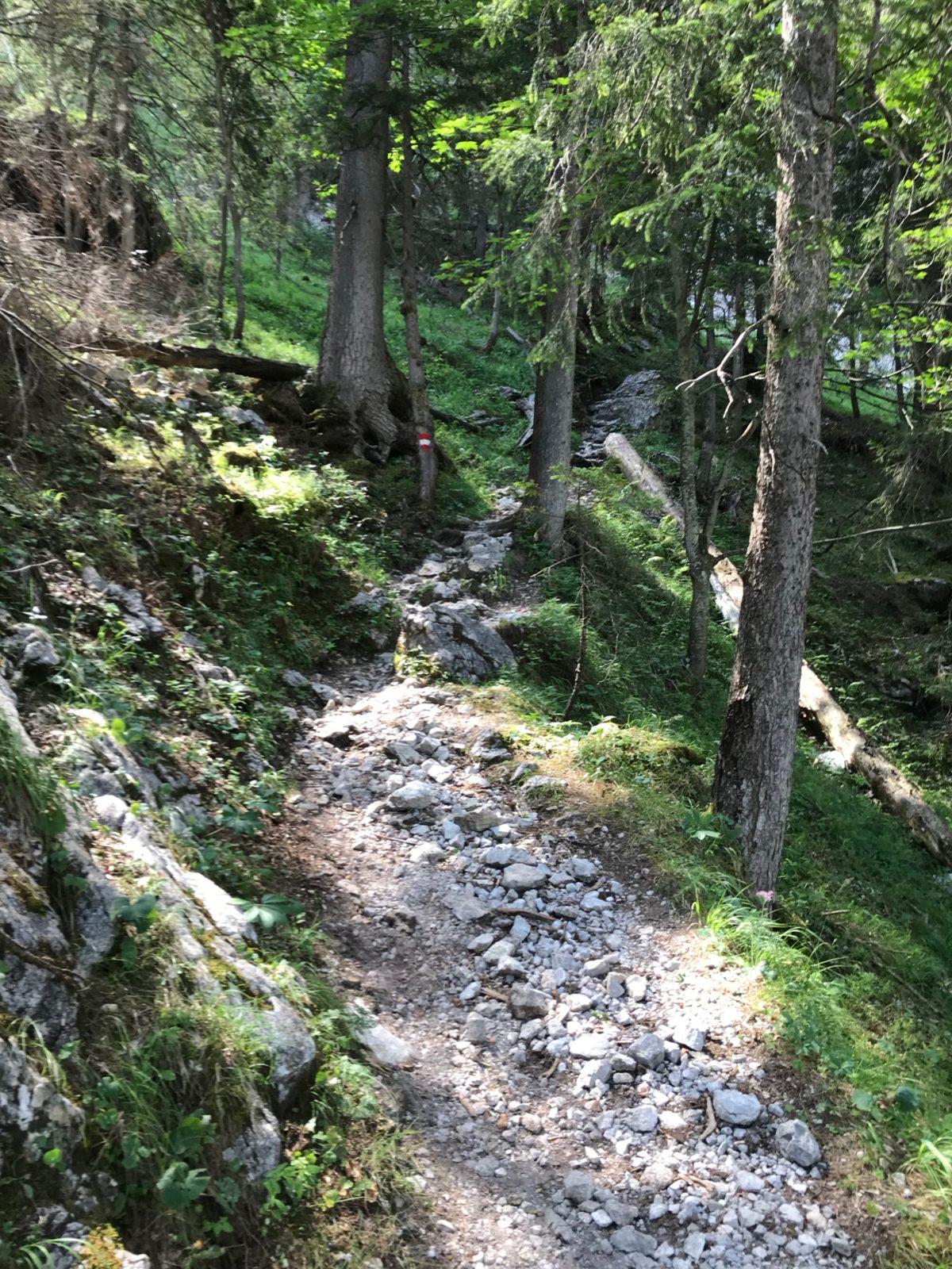 Nach der Leiter ein kurzes Gehstück bergauf durch den Wald