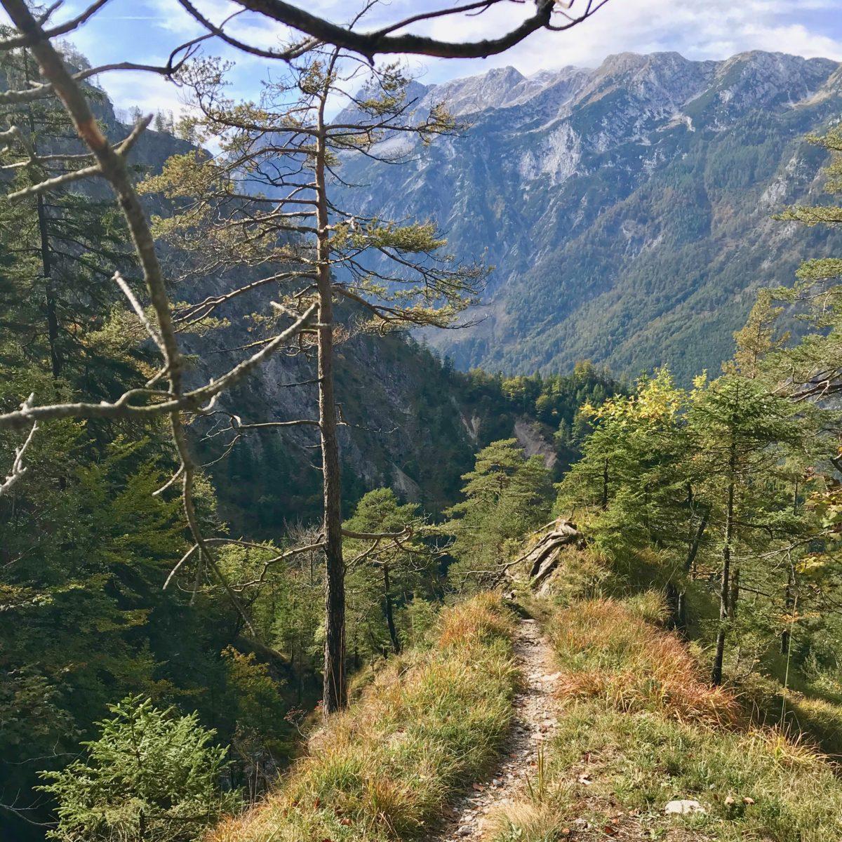 Abstieg im Bergwald