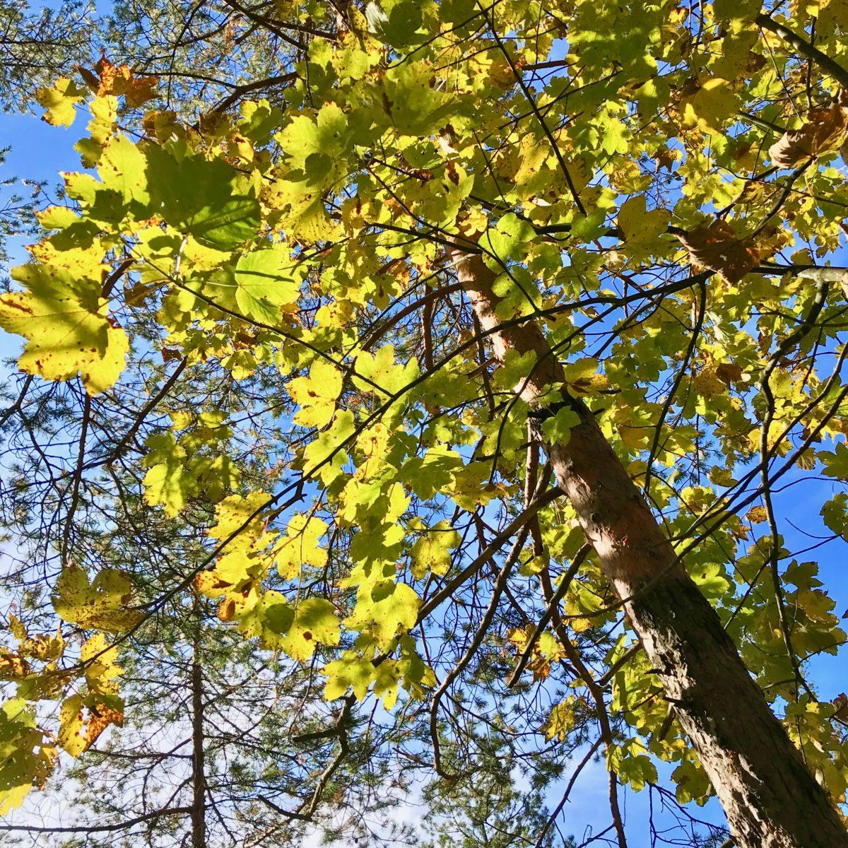 Es wird Herbst…