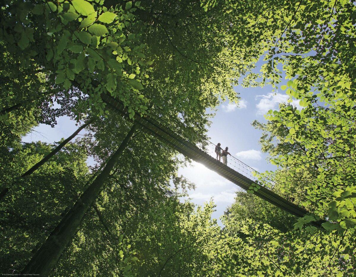 Hängebrücke am Rothaarsteig bei Kühhude, BIld: Rothaarsteigverein e.V. Bjoern Haenssler